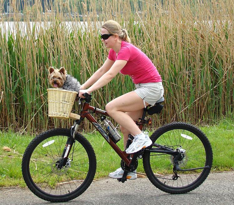Mountainbike als Citybike